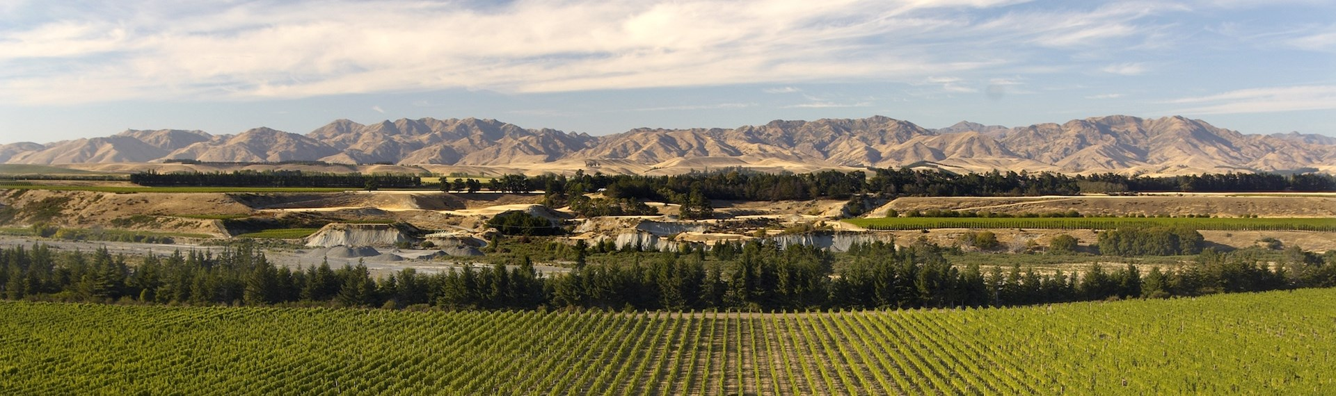 Marlborough's picturesque vineyards with the hills bordering the background, near Blenheim in Marlborough at the top of New Zealand's South Island.